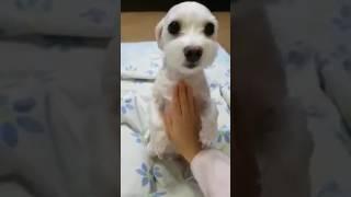 강아지랑 병원 놀이하기