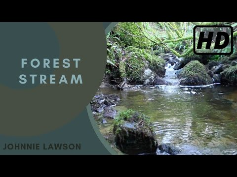 Relaxing Nature Sounds of a Forest-Natural Soothing Sound of a Waterfall & Bird Sounds-Relaxation