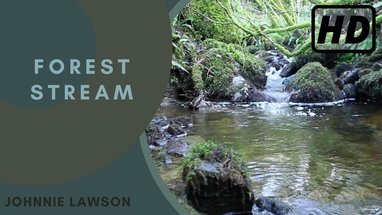 Relaxing Nature Sounds of a Forest-Natural Soothing Sound ... Relaxing Nature Sounds