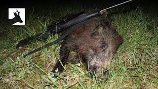 Stalking boar - Polowanie na dziki z podchodu - Chasse Sanglier - Saujagd 2017