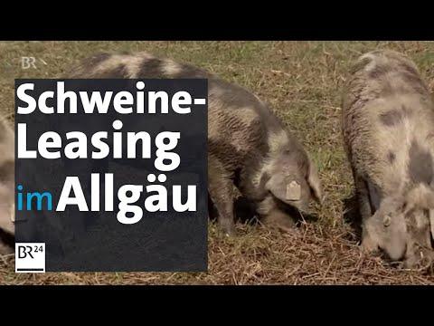 Bio-Fleisch: Die Leasing-Schweine aus Aitrang | BR24