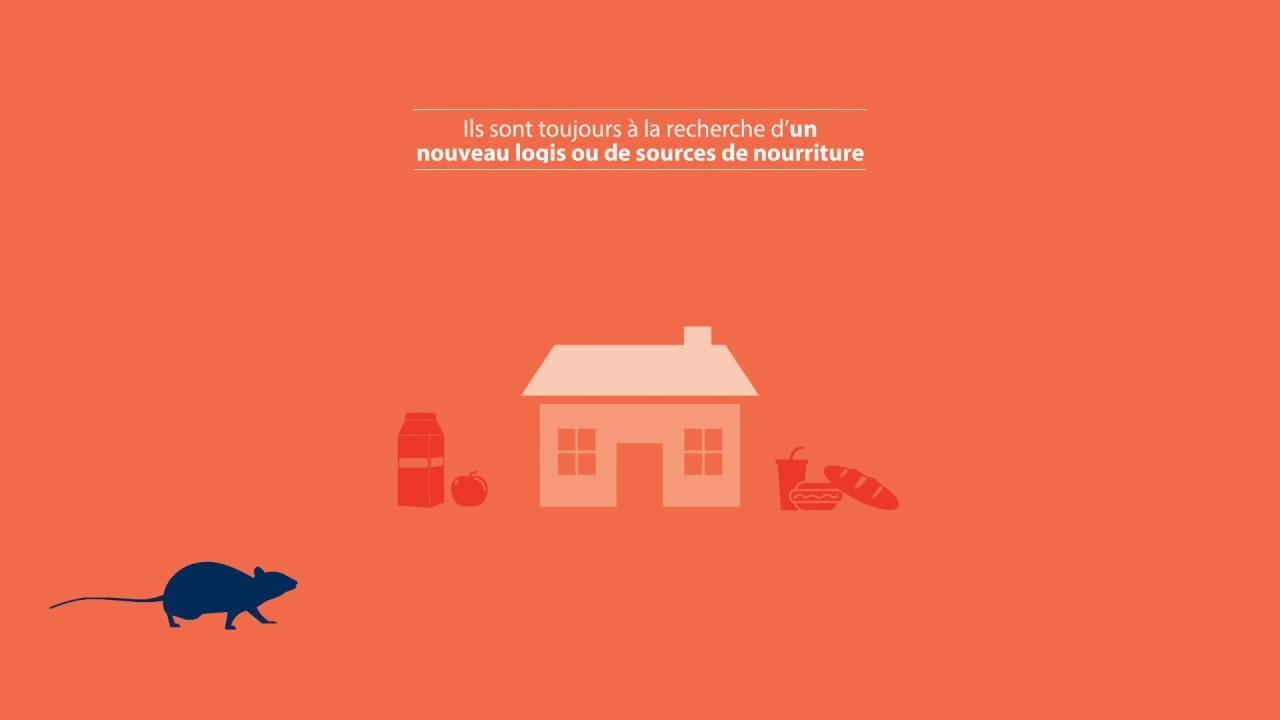 comment se d barrasser des rats rentokil be youtube. Black Bedroom Furniture Sets. Home Design Ideas