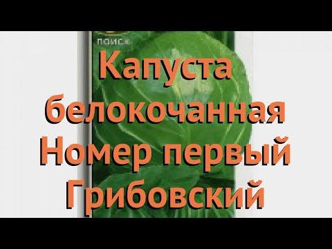 Капуста белокочанная Номер первый Грибовский 147 🌿 обзор: как сажать, семена капусты