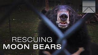 Rescuing Imprisoned Moon Bears in Vietnam
