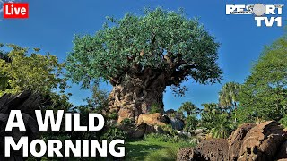 🔴Live: A Wild Morning at Disney's Animal Kingdom - Walt Disney World Live Stream - 3-7-21