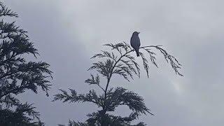 Птичка- невеличка, высоко сижу, далеко гляжу! Аnimals,Tiere