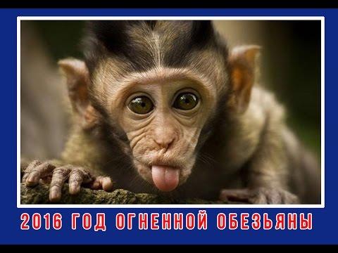 Смешные обезьянки - 2016 год Огненной Обезьяны