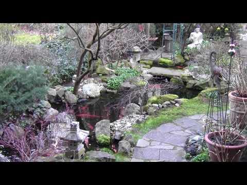 Buddha Pond Watch ~11~ In daylight saving time