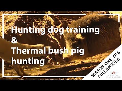 Hunting Aotearoa S01EP06 Hunting Dog Training & Thermal Bush Pig Hunting