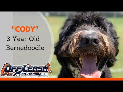 Cody | 3 Year Old Bernedoodle | Off Leash K9 Training, Georgia | Remote Collar Training