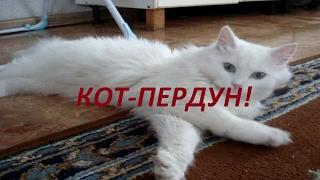 #Кот пердун. #смешные животные.ржач/fanny animals