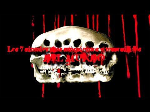 TOP 7: Los rituales más sangrientos y terroríficos del mundo