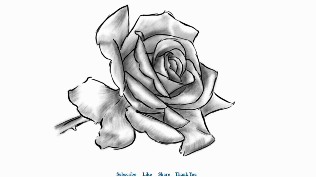 How to draw a Beautiful Rose with Shading Easy to Draw ...