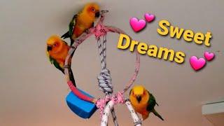 💕 SWEET DREAMS 💕
