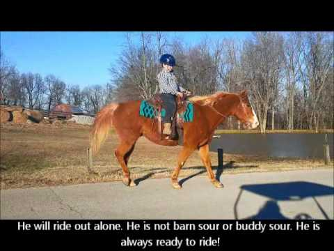 "FOR SALE ""Cody"" Sorrel Paint Horse Gelding - Beginner Broke - Trail or Pleasure or Show"