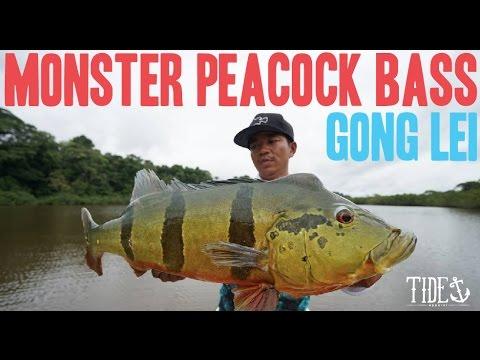 MONSTER PEACOCK BASS - Gong Lei - Tide Apparel