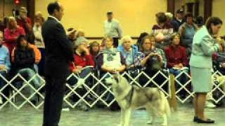 Siberian Husky Club Of America National Specialty 2010