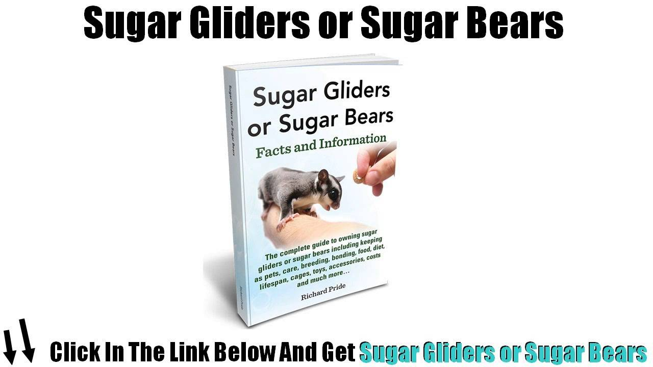 Sugar Glider Reviews