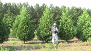 Pruning Christmas trees with a SAJE