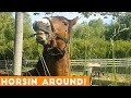Funniest Horse Videos of 2018 Weekly Compilation | Funny Pet Videos