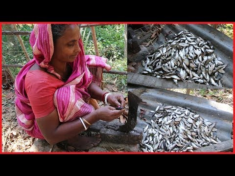 Amazing Cutting Small River Fish In Village | Lot of Pool Barb Fish Cutting By Village Woman