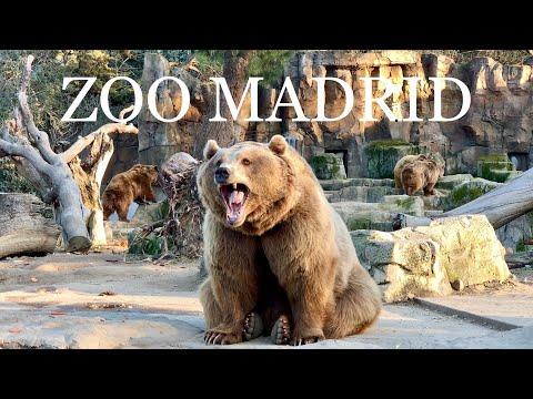 [4K] ZOO AQUARIUM MADRID 2019