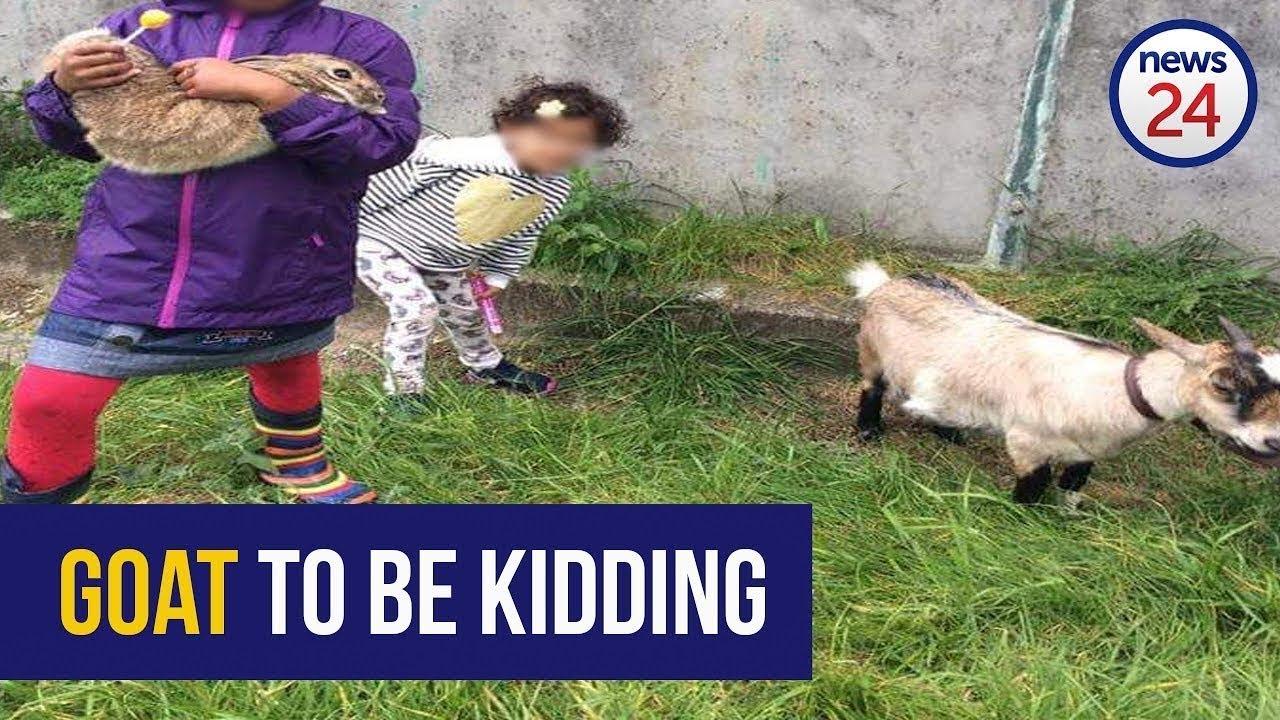 WATCH: The goat that got Woodstock talking | News24