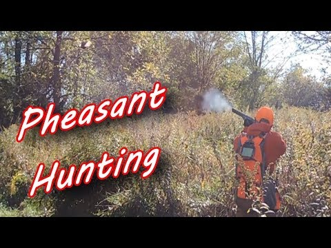 Pheasant Hunting New Jersey 2019