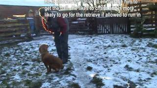 Cocker Spaniel Basic Dog Training