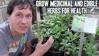 Grow Medicinal and Edible Herbs in Your Garden