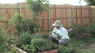Gardening Tips Kale Harvest.mpg