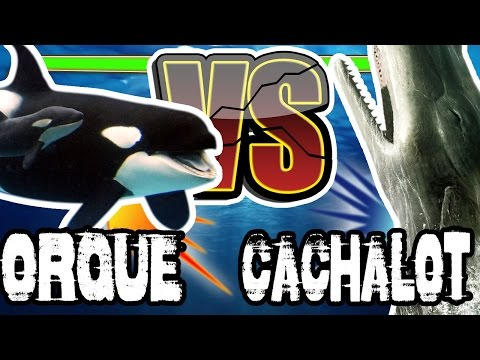 ORQUES VS CACHALOT - C KI LE + FOR?