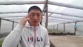 Секрет!!! Как стать миллионером выращивая овощи в теплицах.