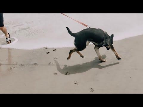 beach-trip..-fail-(she-wouldn't-stop-barking)