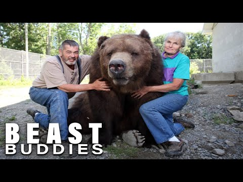 The People Who Live With Giant Bears | BEAST BUDDIES SPECIAL