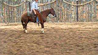 Cutting Horse Training session Kenny Miller
