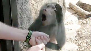 Monkeys Reaction to Magic 🤩- Funny Monkey Videos \x5bFunny Pets\x5d