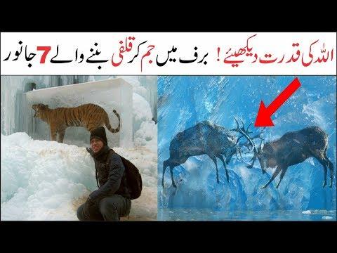 7 Amazing Animals In The World   Asif Ali TV