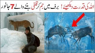 7 Amazing Animals in the world | Asif Ali TV