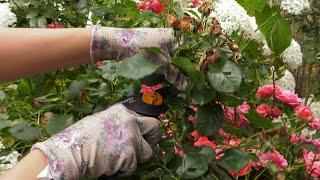Lipiec w ogrodzie. Kalendarz ogrodnika na 01.07 - 07.07. Prace ogrodnicze w lipcu