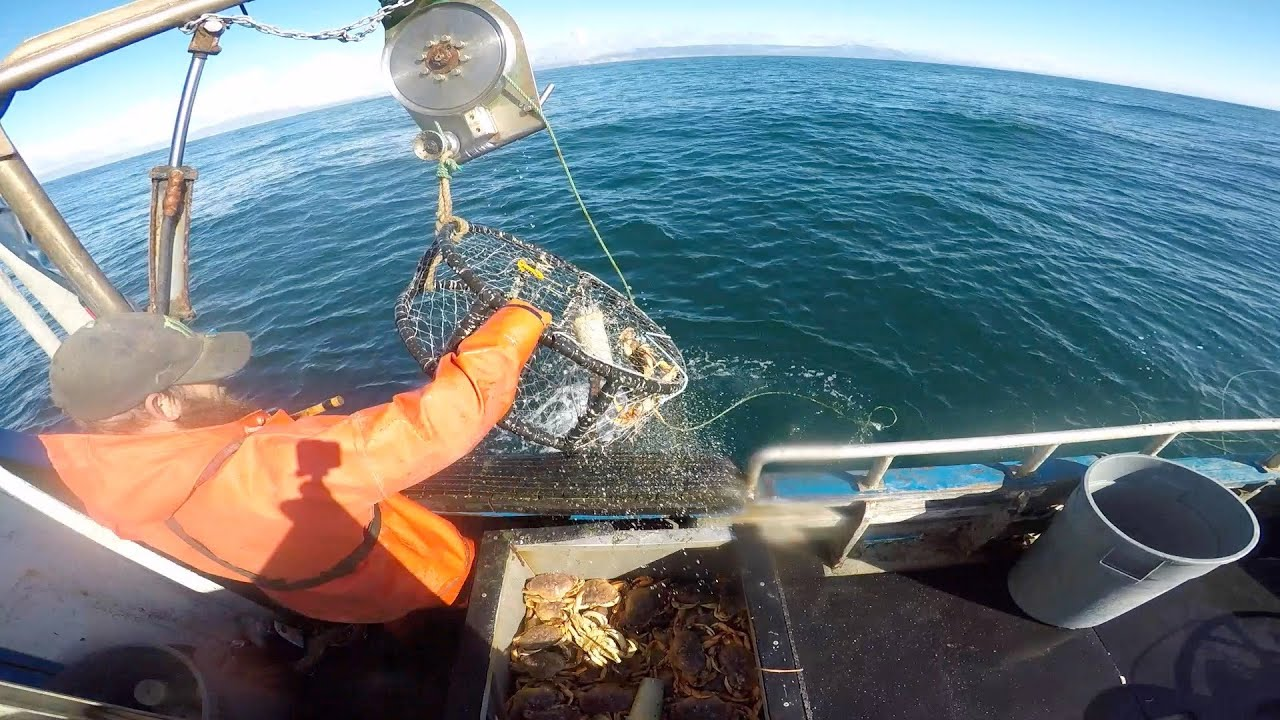 A Day Crabbing