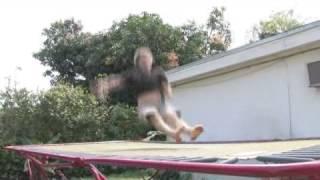 Swivel Hips on Trampoline