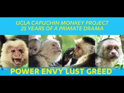 UCLA Capuchin Monkey Project: 25 Years of a Primate Drama