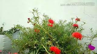 Plantas Que Gostam De Sol