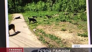 В Орле начался отстрел собак
