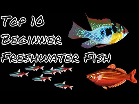 Top 10 Freshwater Fish For Beginners