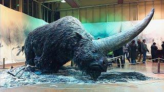 10 Wymarłych Zwierząt, Które Naukowcy Chcą Przywrócić do Życia