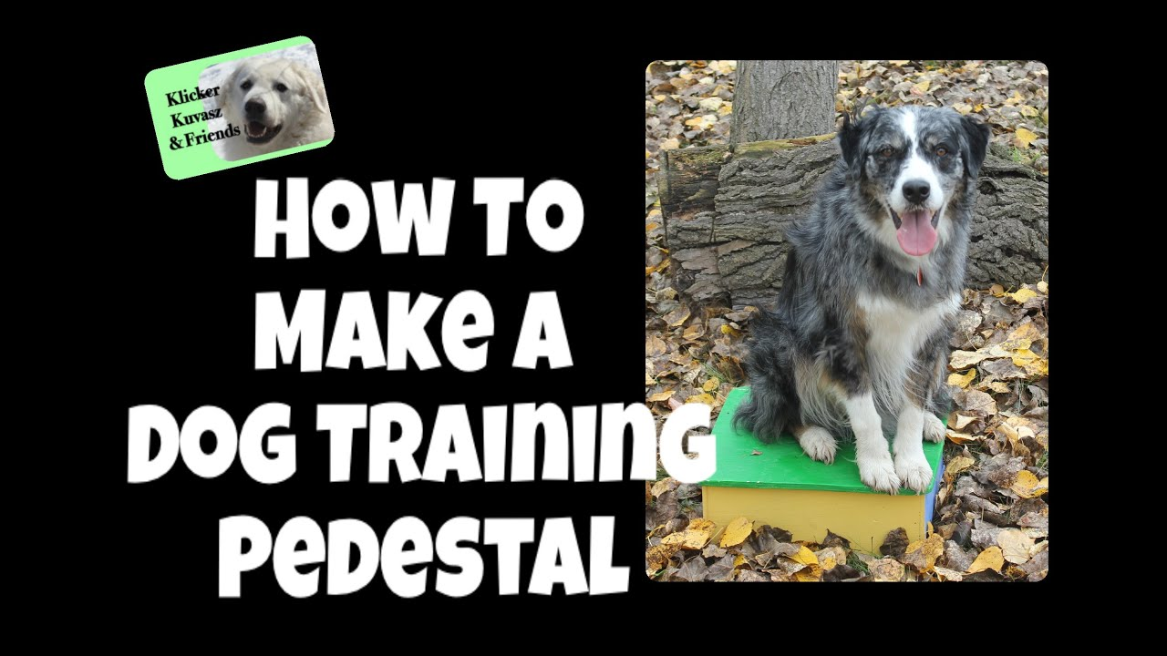 Pedestal Training For Dogs