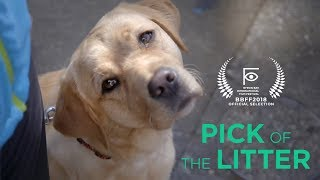 BBFF2018 Official Selection: Pick of the Litter