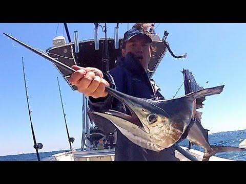 Double Header Sailfish Fishing South Florida